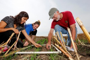 Tom Kaspar, right, of the National Laboratory for Agriculture and the Environment, examines an emerging cover crop of winter cereal rye with research associate Jyotsna Acharya, left, and agronomy undergraduate Taylor Berkshire on Iowa State's Boyd Farm. (Photo by Christopher Gannon/Iowa State University)